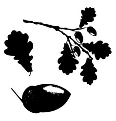 Oak leaf acorn and branch isolated silhouette vector