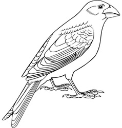 Sparrow vector image