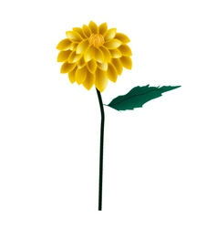 Yellow dahlia flower on a white background vector