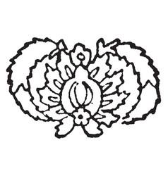 Herati design originated in the old city of herat vector