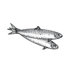 anchovy fish hand drawn isolated icon vector image