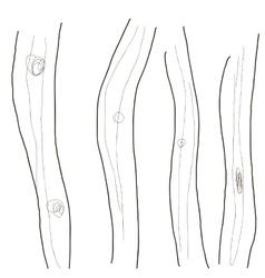 Design image of tree trunks wallpaper vector