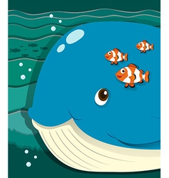 Whale and clownfish swimming vector