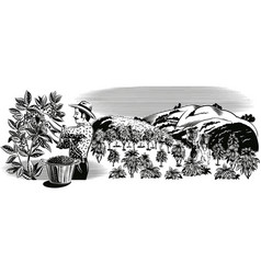 Landscape with coffee wallet on a plantation vector