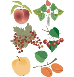 Juicy berries and a fruit vector image