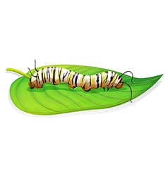 Monarch butterfly - danaus plexippus - larva stage vector