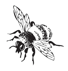 Engraving flying bee isolated on white background vector