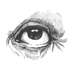 Eye realistic hand drawn vector