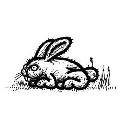 cartoon image of rabbit vector image vector image