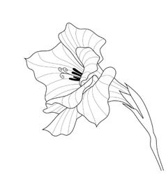 Flower gladiolus Contour graphic art vector image
