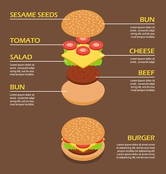 Isometric of Burger ingredients infographic vector image vector image
