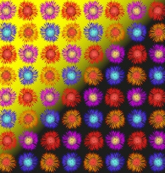 Asters daisies and hyacinths vector