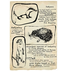 Badger hedgehog and otter - placard vector