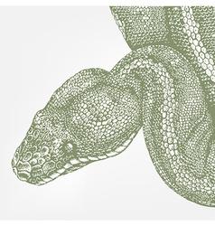 Snake head green boa vector