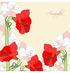 Background with red pink amaryllis vector