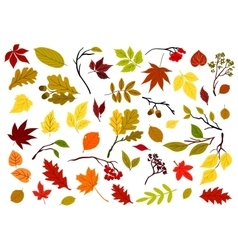 Autumnal leaves berries and herbs vector