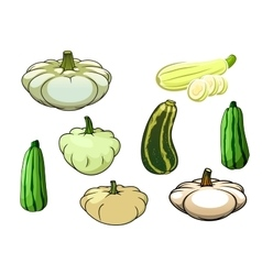 Pumpkin zucchini and pattypan squash vector