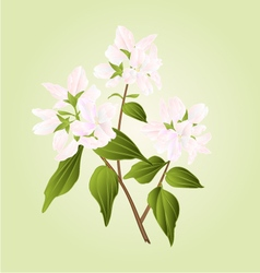 Branch decorative shrub nature background vector