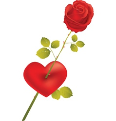 rose with heart vector image