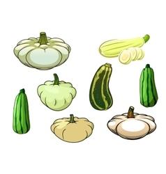 Pumpkin zucchini and pattypan squash vector