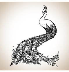 Peacock sketch vector