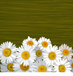 Green striped background with flowers of camomile vector