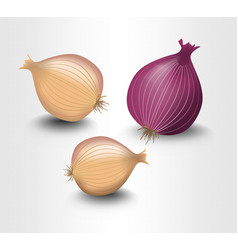 Isolated onion yellow and purple photorealistic vector