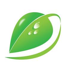 Big green leaf dew drops organic natural vector