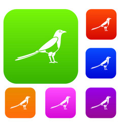 Bird magpie set collection vector