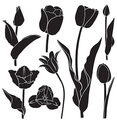 Tulips silhouette set vector image vector image