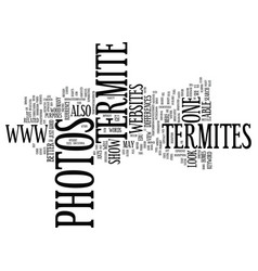 Termite photos text background word cloud concept vector