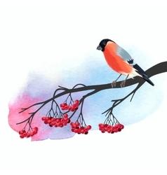 Bullfinch and rowan vector image