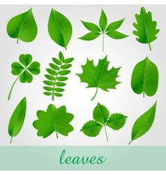 Natural green beautiful leaves icon set eps10 vector