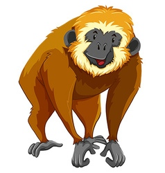 Brown gibbon with happy face vector