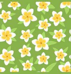 White and yellow plumeria flowers on green vector