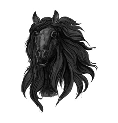 Black arabian racehorse sketch for equine design vector