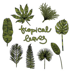 hand drawn botanical vector image vector image