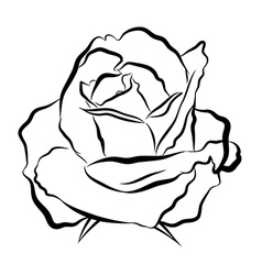 Sketch line drawing of rose vector