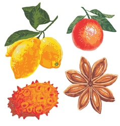 Set of fruits on a white background vector image
