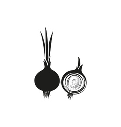 Onion on white background vector