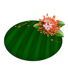 Beautiful Red Ixora Flowers on Banana Leaf vector image