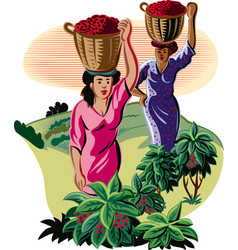 Girls with baskets of coffee vector