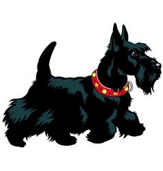 scottish terrier vector image
