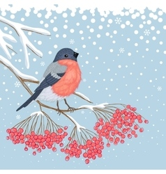 Winter card with bullfinch on the branch of rowan vector