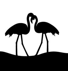tropical birds Flamingo vector image