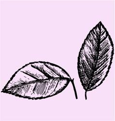 Citrus leaves vector