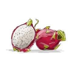 Dragon fruit pitahaya sketch for your design vector