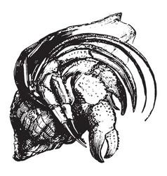 Hermit crab vintage vector