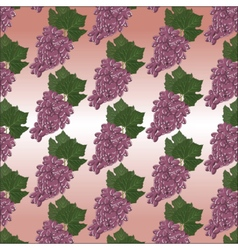 Grapes clusters pattern vector image