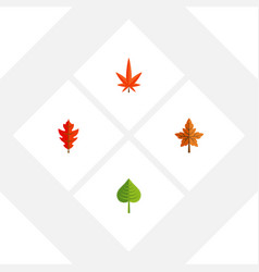 Flat icon leaf set of aspen hickory frond and vector